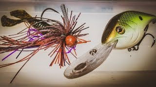 How To Catch Bass During The Summer To Fall Transition