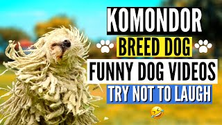 Funny Komondor Breed Dog | Dog Funny Videos Complications 2021