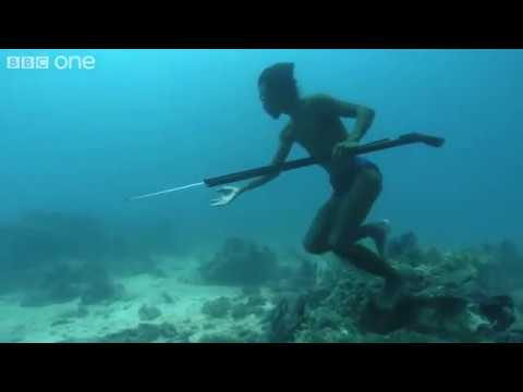 Подводная охота без снаряжения! Есть чему поучиться