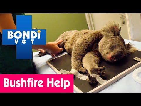 🐨-dr-alex's-bushfire-emergency-in-australia