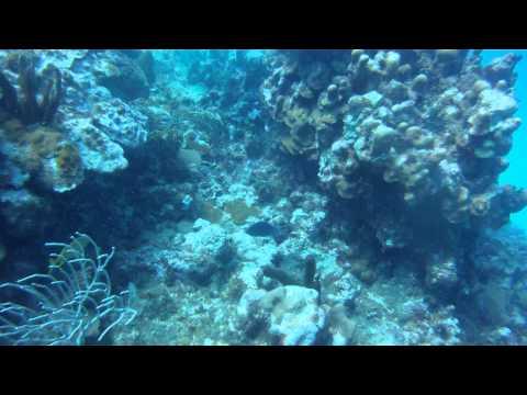 Orient Bay, St. Martin - Reef
