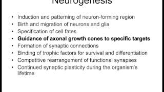 Lecture 8 Motor Neurons