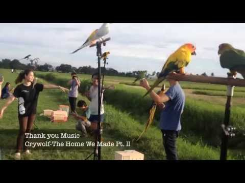 Free Fly Macaw & Sun Conures