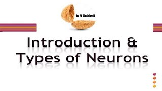 Introduction and Types of Neurons in Urdu/Hindi