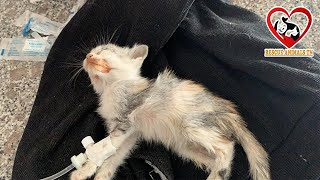 Rescue a pitiful, Sick kitten, God please Save the kitten/ Rescue Animal TN Center