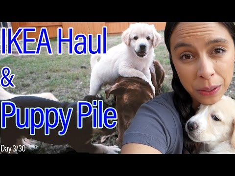 Day 3: Puppy Pile | IKEA Haul!
