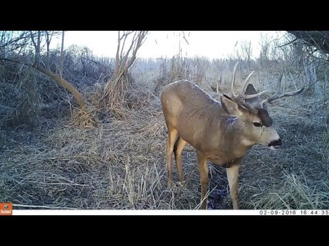 River Bottom Trail Cam Video