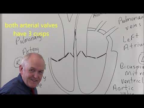 Heart 1, Basic Structure And Blood Flows