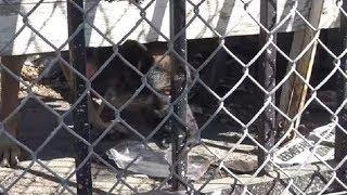 Собаку со сломанной лапой бросили без еды и воды на старой парковке