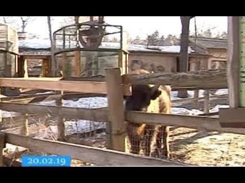ТРК ВіККА: Тварини черкаського зоопарку потерпають від некультурних відвідувачів