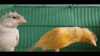 افضل برنامج شرب ماء تمد به طيورك لتكون سليمة من الامراض