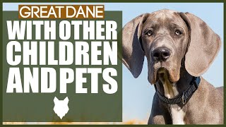 GREAT DANE WITH CHILDREN AND PETS