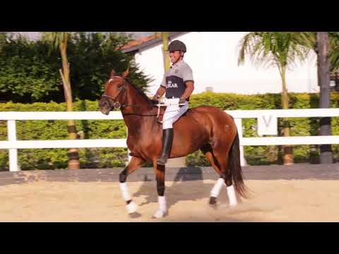 Lote 14 -Isolda HSF -Cavalos puro sangue Lusitanos - Coudelaria aguilar