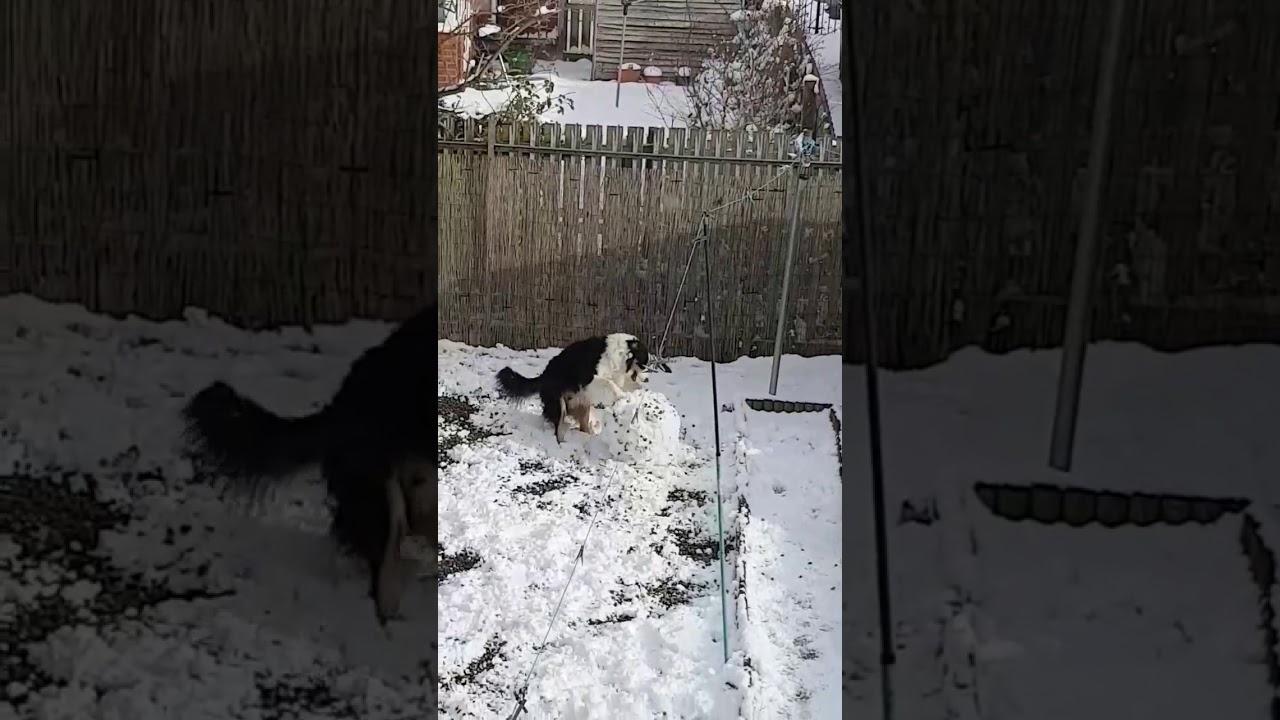 Кутре знае да прави Снешко