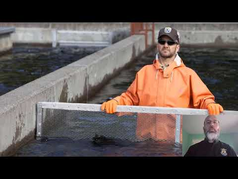 Determining Fish Length