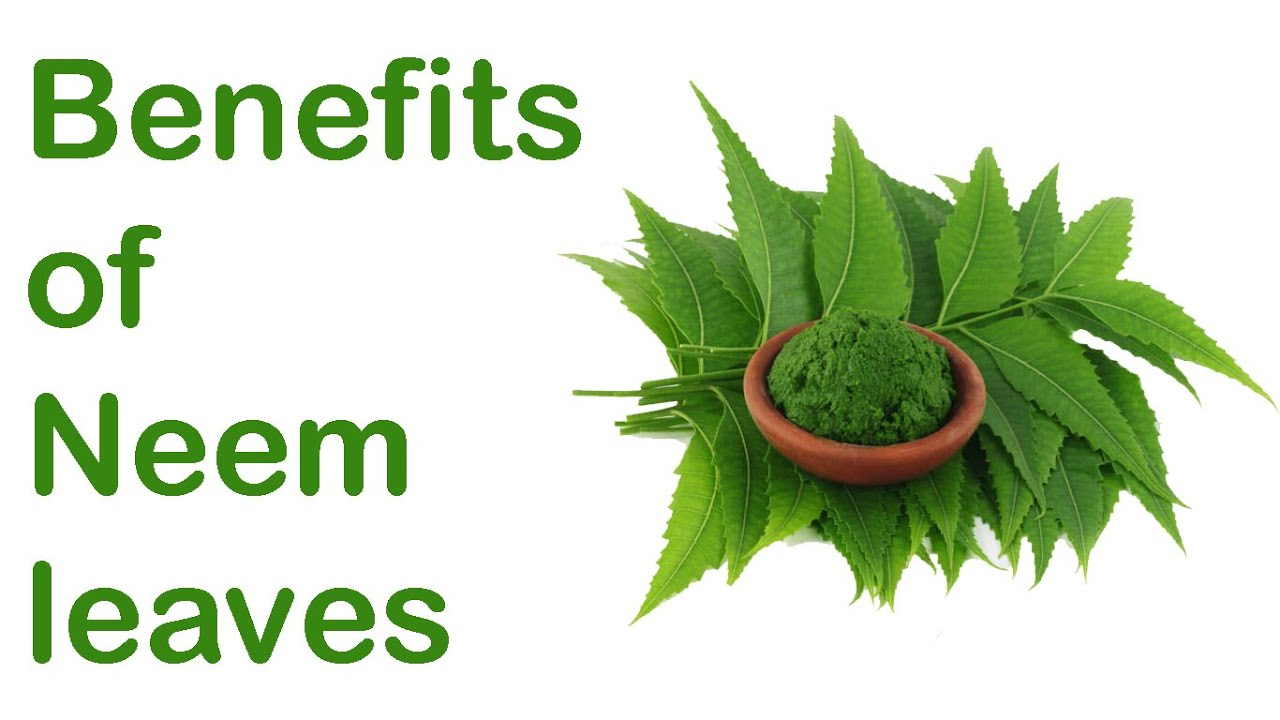 neem leaves benefits in hindi neem ke fayde  neem leaves127808 benefits in hindi128077 neem ke fayde 234423682350 23252375 23472366235123422375 234423682350 23252375 232723692339 234423682350 23252375 235423662349 128076