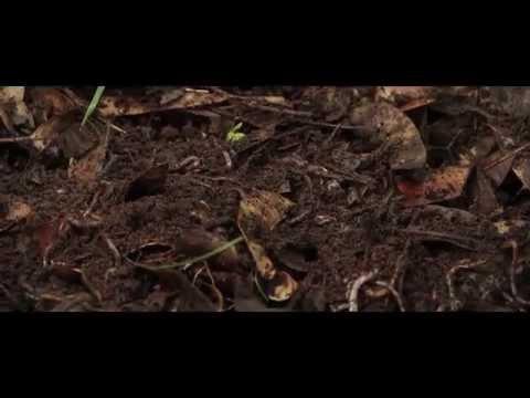 SOCIAL FORESTRY - SATARA DIVISION, MAHARASHTRA.
