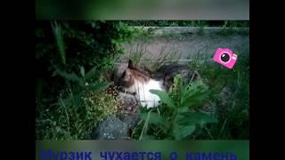 Мурзик и камень / Cat and stone. Funny cat