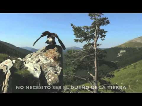 Canción Contra El Maltrato Animal #Alexandervideos