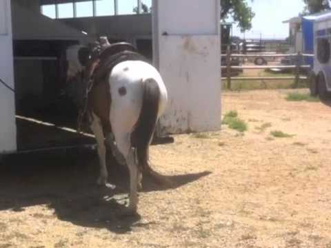 Colorado Horse Rescue - Isis: Partnership Training at MRHT