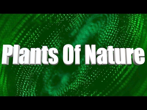 Plants Of Earth _ A Short Nature Film