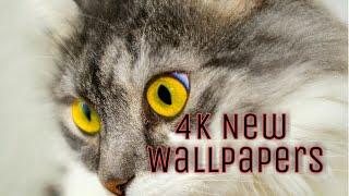 Desktop Wallpaper4k Beautiful Wallpapers/desktop Backgrounds {free} Desktop Wallpaper