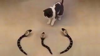 おかしい猫 - かわいい猫 - おもしろ猫動画 HD #109