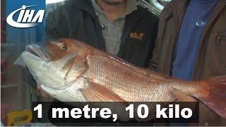 Gambar cover Oltayla 10 Kiloluk Mercan Balığı Yakaladı