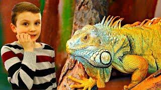 Зоопарк для детей - Даник и Леша кормят животных в зоопарке / Дети и животные