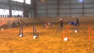 Flyland Bernice Arrow (Gepa) - A2, clear run