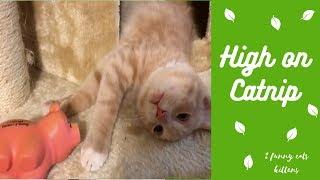Catnip thumbnail