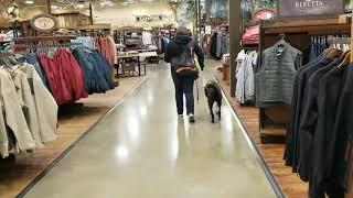 Service dog public access testing.