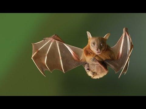 Вопрос: Как называется отряд млекопитающих, к которому относятся летучие мыши?