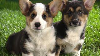 Развивающие видео для детей: Собаки. Educational video for children: Dogs