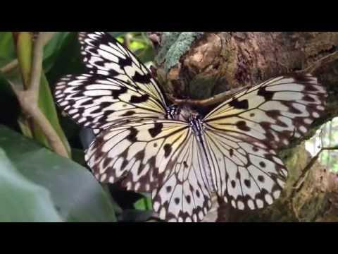 Butterfly World - Tradewinds Park - Coconut Creek, Florida (O6.I6.I6)