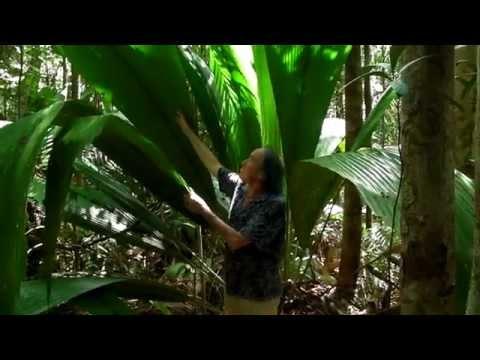 FIELD TRIP WITH PATRICK BLANC - BORNEO - KUCHING DIVISION