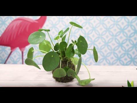 Selection De 24 Plantes Depolluantes Pour Votre Interieur Avec
