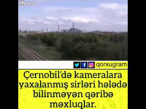 Çernobil'də kameralara yaxalanmış sirleri helede bilinməyən qeribe mexluqlar