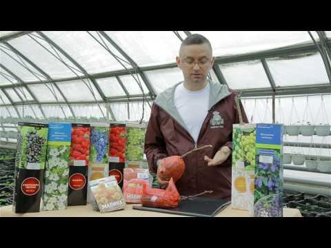 Как выбрать малину для посадки