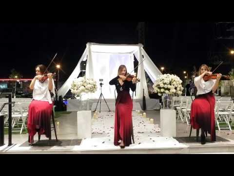כנריות-שירים עכשוויים,כנריות בקבלת פנים לאירועים מיוחדים,כנריות לקבלת פנים בחתונה-0546211560