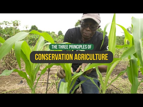 CONSERVATION AGRICULTURE - The Three Principles - Ghana [2019]
