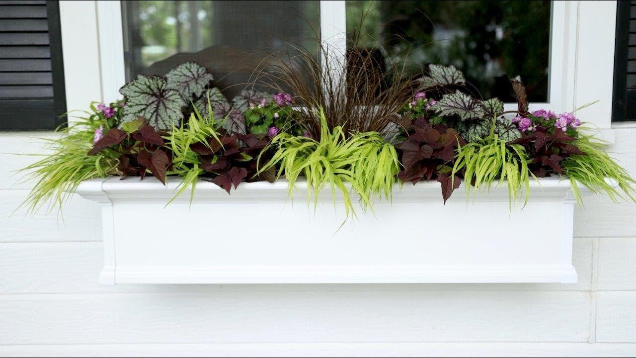 Ideas For A Window Box In The Shade