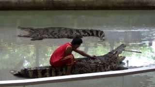Trình cao trong huấn luyện cá sấu...của Thái Lan thumbnail