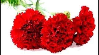 Как Легко Сделать Цветы Гвоздика Пион гофро_бумаги - Craft Tutorial.Поделки с детьми День Папы МК