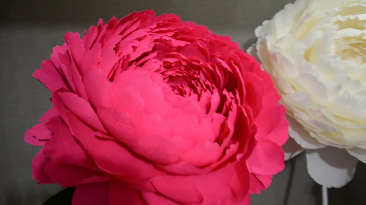 Большие цветы из гофрированной бумаги мастер класс