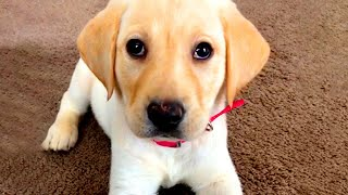 Cute Silly Dog Bloopers | Funny Pet Videos