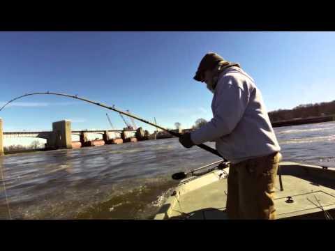 Mississippi River Spoonbill Snagging