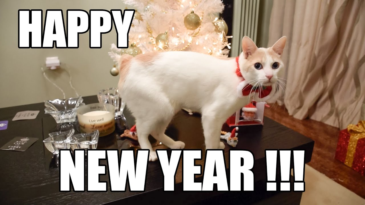 Final photo of #2017 is of our littlest #cat Meme, looking ...