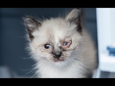 Treating An Eye Infection In A Kitten Youtube