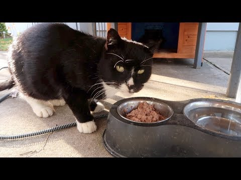 Boo Day 132 - Cats Behaving Badly - Training And Socializing A Feral Cat